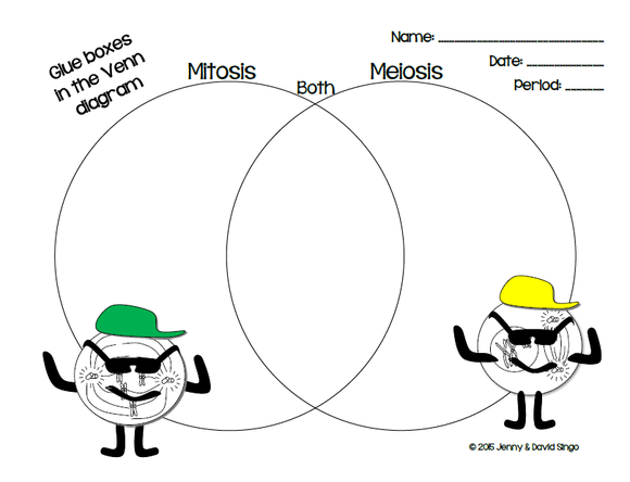 Mitosis And Meiosis Tagged Mitosis Vs Meiosis Venn Diagram Math