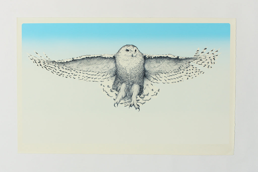 Snowy Owl - William Reynolds
