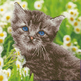 Diamond Art Kit - Kitten