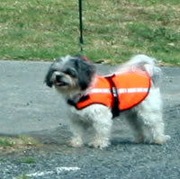 High Visibility Dog Coat Extra Small