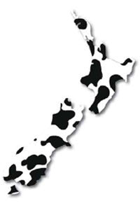 NZ Map - Cow Pattern