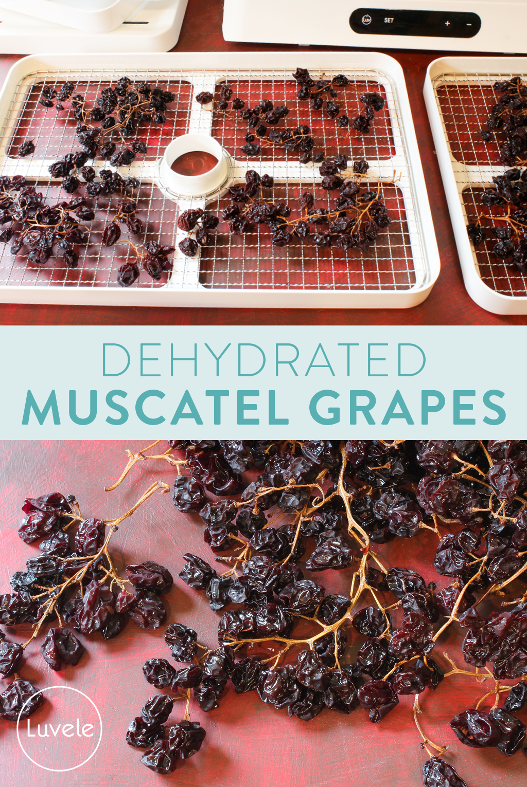dehydrating muscatel grapes