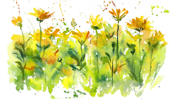 calendula flower water color