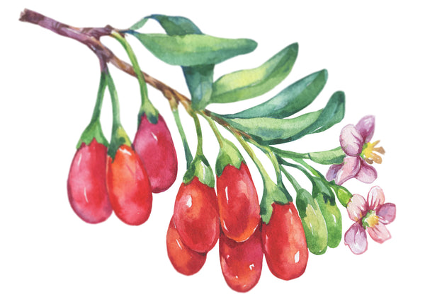 goji berries watercolor image