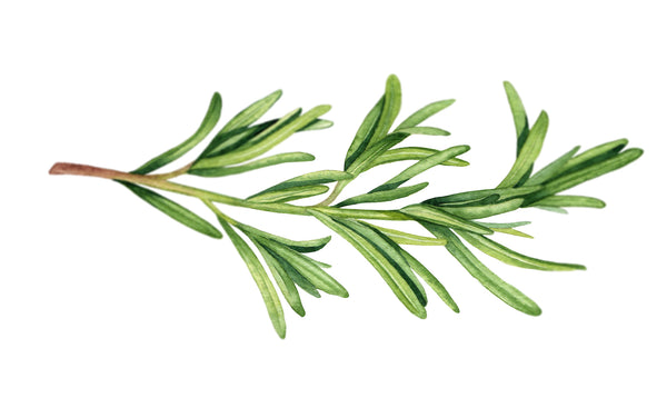 Rosemary an Antioxidant or Preservative?