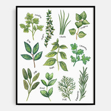 Load image into Gallery viewer, Illustrated Herbs Print