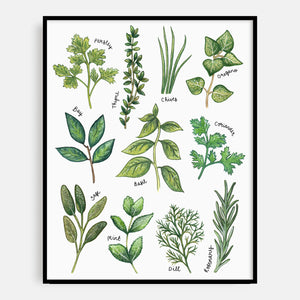 Illustrated Herbs Print