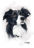 Full colour pet portrait