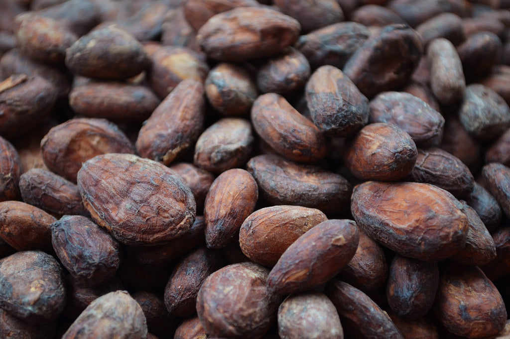 cacao cocoa beans