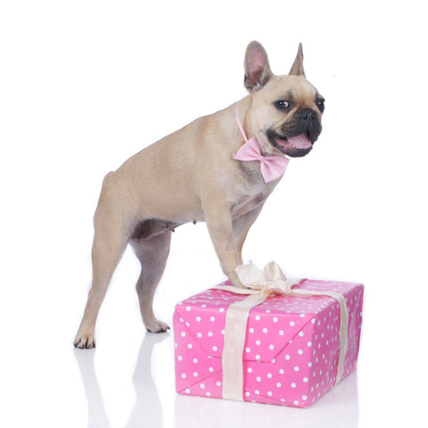 Dog Gifts & Cards