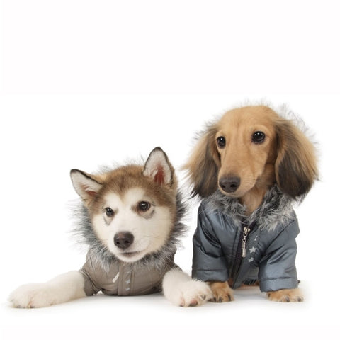 Slinky Bomber Jacket Grey - Snooty Paws - 1