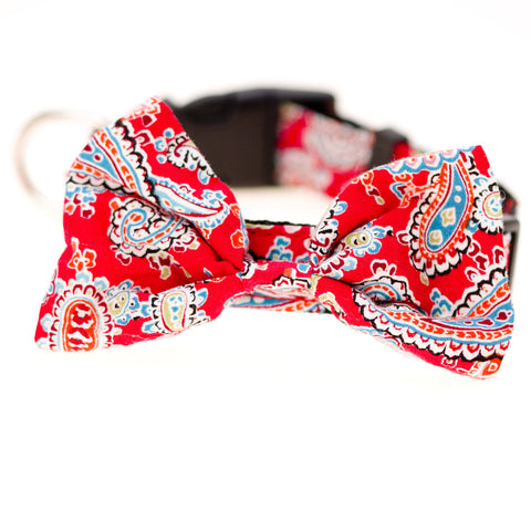 Bowtie Collar Paisley - Snooty Paws