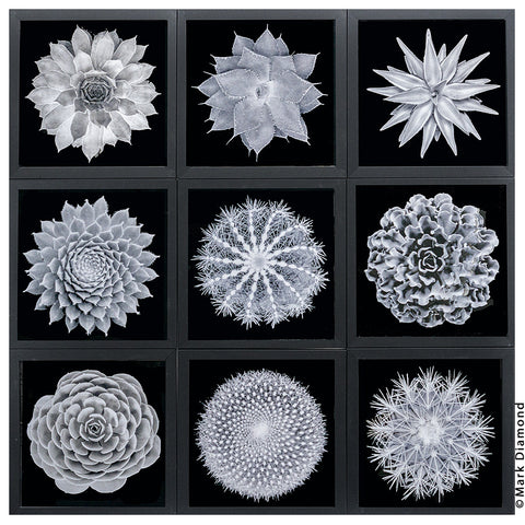 Sacred Geometry of Plants in 3D