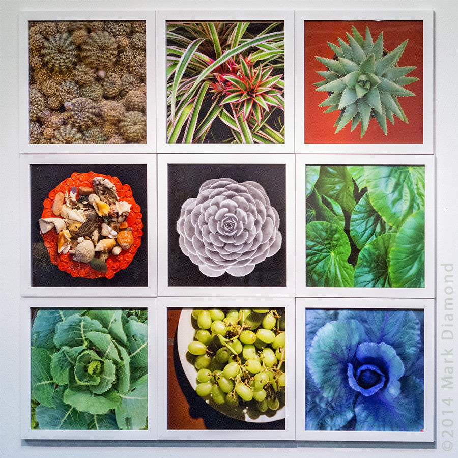 Botanical Studies in 3D with Frames