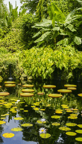 Fairchild Botanical Gardens Amazonia Pond in 3D