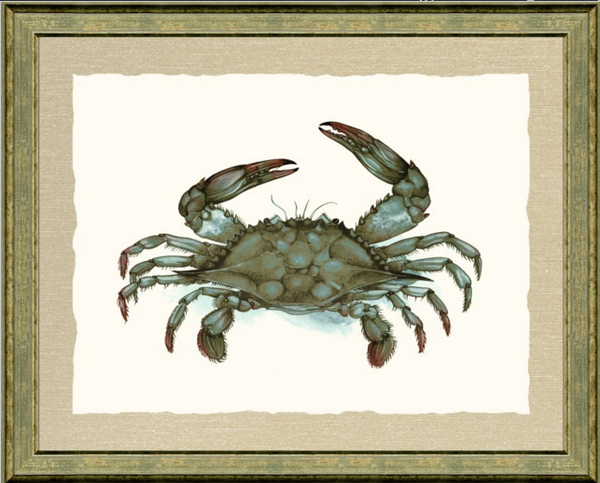 Blue Crab Print, Matted