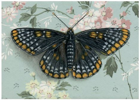 Print - Baltimore Checkerspot Butterfly