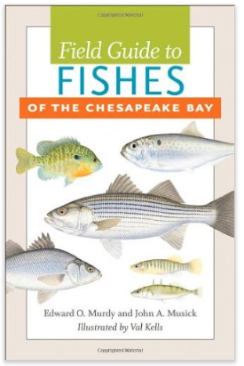 Field Guide to the Fishes of the Chesapeake Bay