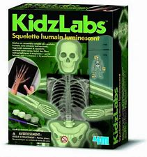 4M KIDZLABS - SQUELETTE HUMAIN LUMINESCENT