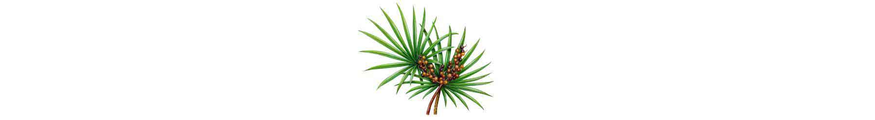 saw palmetto for dht hair loss
