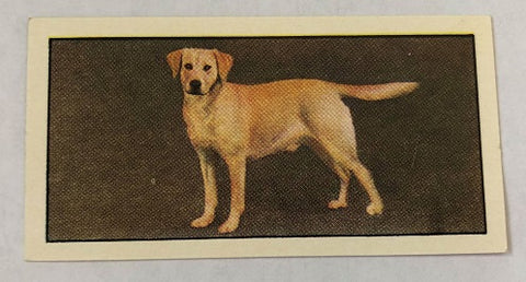 Labrador Retriever Collector Tea Card