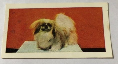 Pekingese Collector Tea Card
