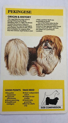 Pekingese Breed Card