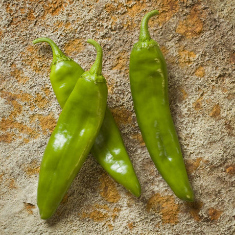 Fresh Hatch Green Chile (MILD - 1904) - 5 lbs