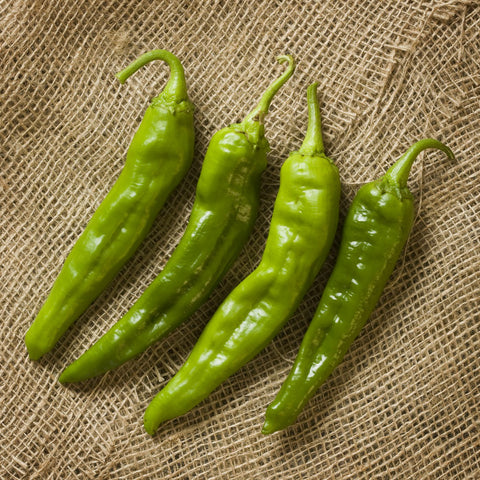Fresh Hatch Green Chile (HOT - SANDIA) - 5lbs