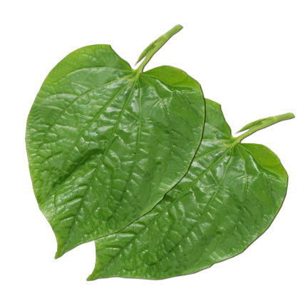 Daun Kaduk /Wild Pepper Leaves