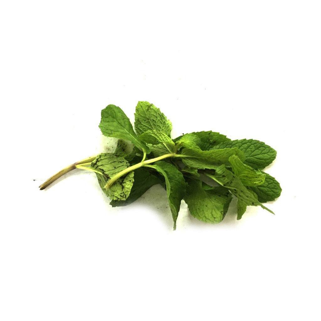 Daun Pudina  / Mint Leaves