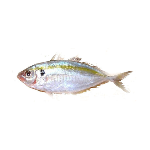 Ikan Selar Kuning / Yellow Stripe Trevally