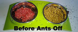 Ants Off Tray