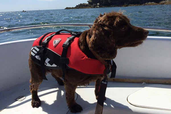 EzyDog Flotation Vest With Grab Handle in Xmas Red!