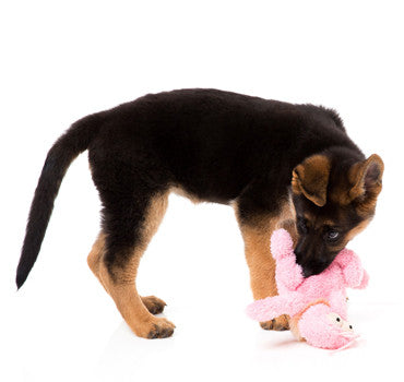 Puppy Plush Toy - Flea