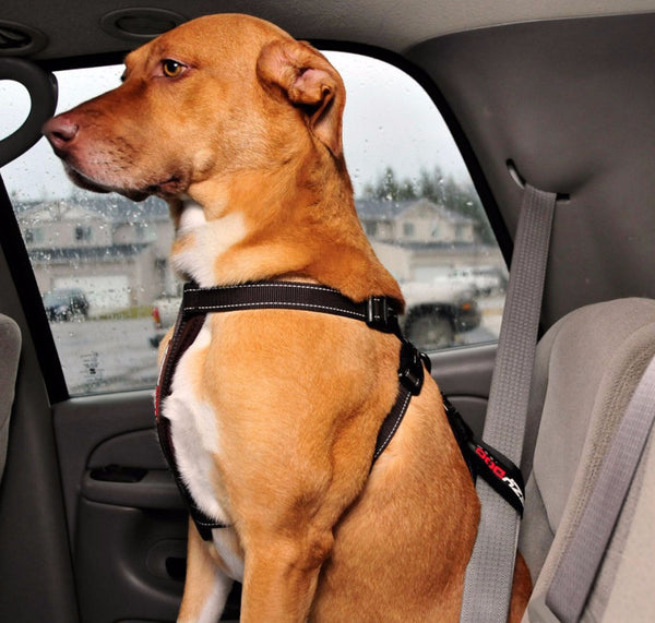 EzyDog Chest Plate Harness with Free Car Restraint
