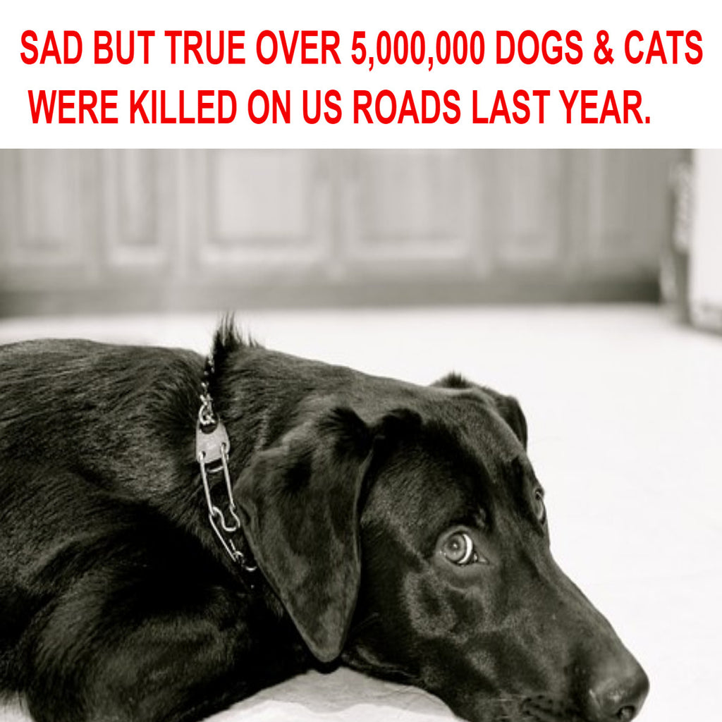 OVER 5,000,000 DOGS & CATS WERE KILLED ON US ROADS LAST YEAR.