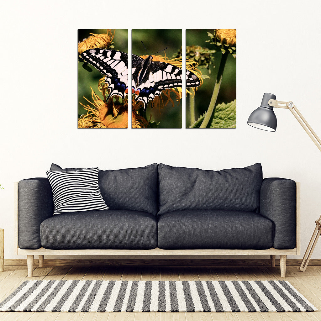 Butterfly 3 Piece Framed Canvas