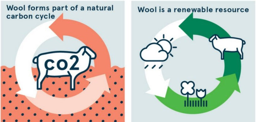 Wool and the sustainability of wool, natural and renewable fabrics