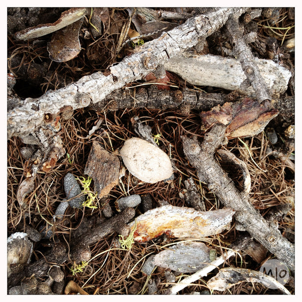 Bark inspiration for Smalls No. 4 Pendant by Melissa Osgood