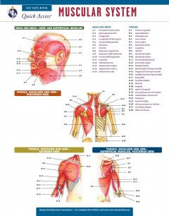 Muscular System: Rea Quick Access reference Chart
