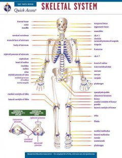 Skeletal System: Rea Quick Access Reference Chart