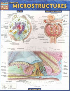 Anatomy Microstructures - cards