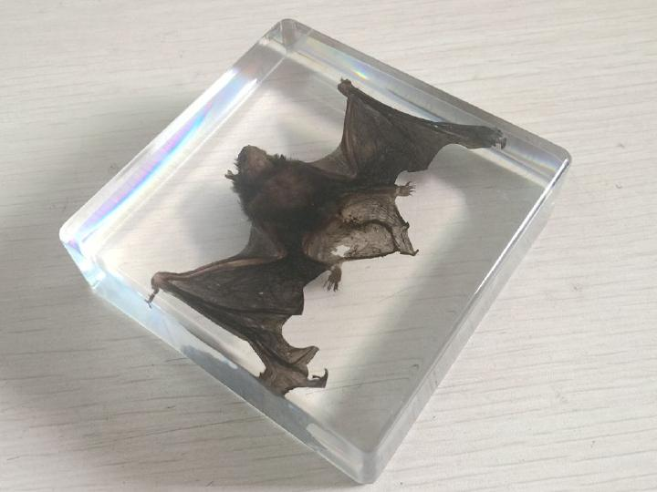 Chinese Pipistrelle Bat Animal Specimen in Clear Acrylic Lucite Paperweight