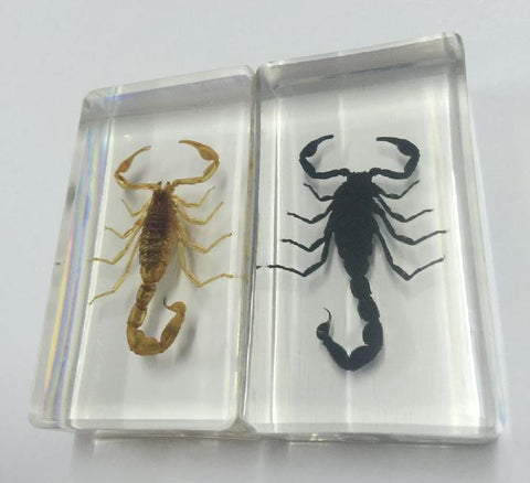 2 PCS Real Scorpions in Clear Lucite Resin Paperweights
