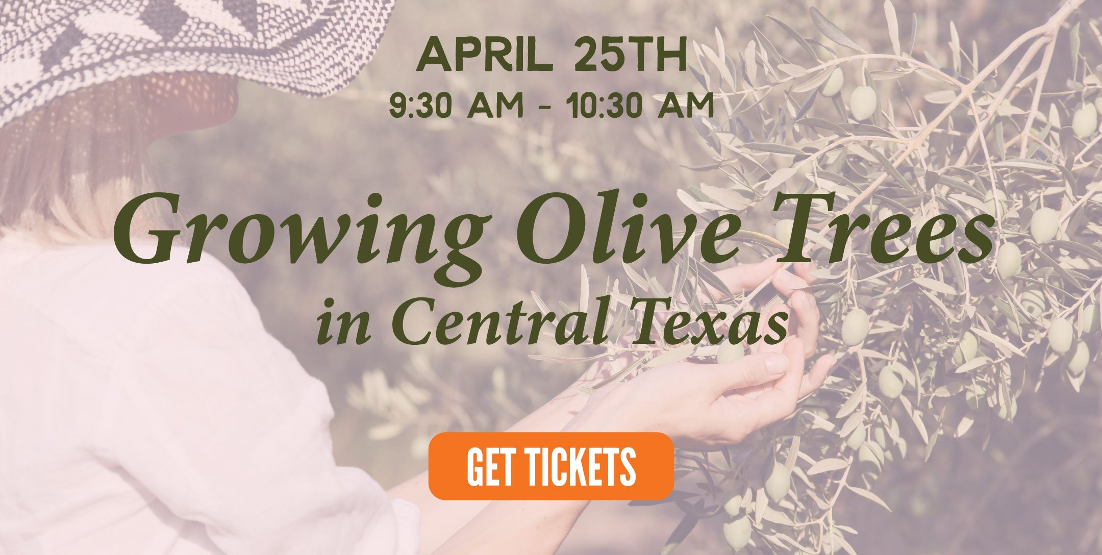 growing olives | texas hill country olive co.