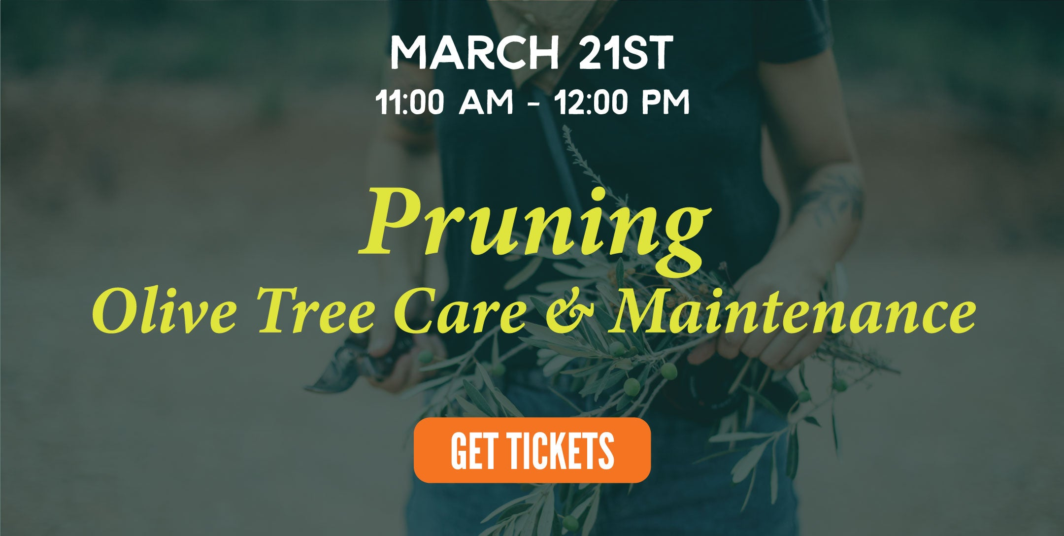 Pruning | Texas Hill Country Olive Co.