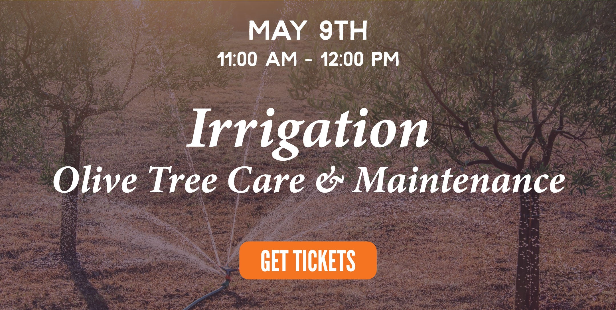 irrigation | texas hill country olive co.