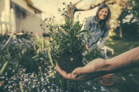hand holding plant gardening