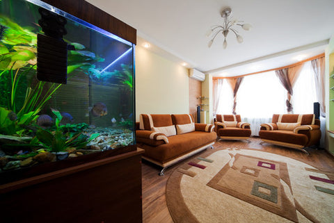 aquarium in apratment
